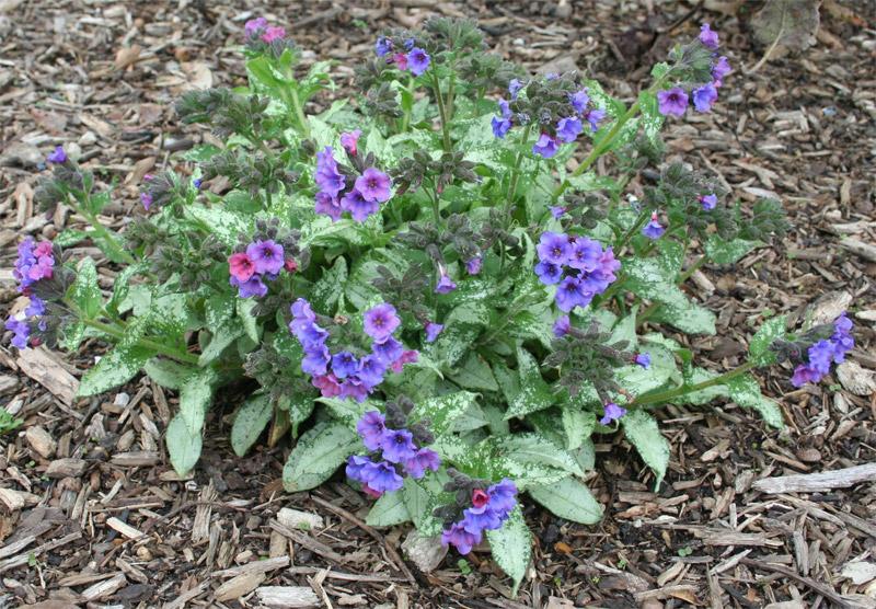Найперші весняні квіти. Весняні первоцвіти