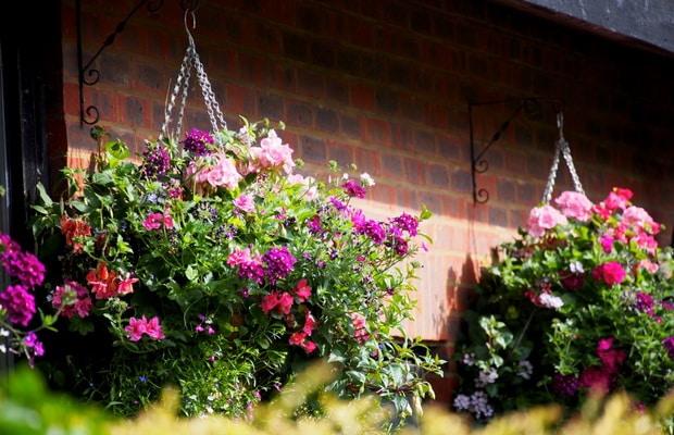 Як посадити краще квіти. Де садити квіти? невибагливі квіти для дачі