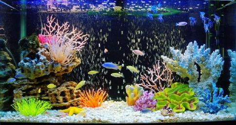 Правила оформлення акваріума своїми руками. Оформлення акваріума своїми руками: грунт, корчі, акценти як зробити гарний акваріум своїми руками