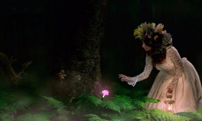 Чи є квітки у папороті. Коли цвіте папороть? чи цвіте папороть насправді