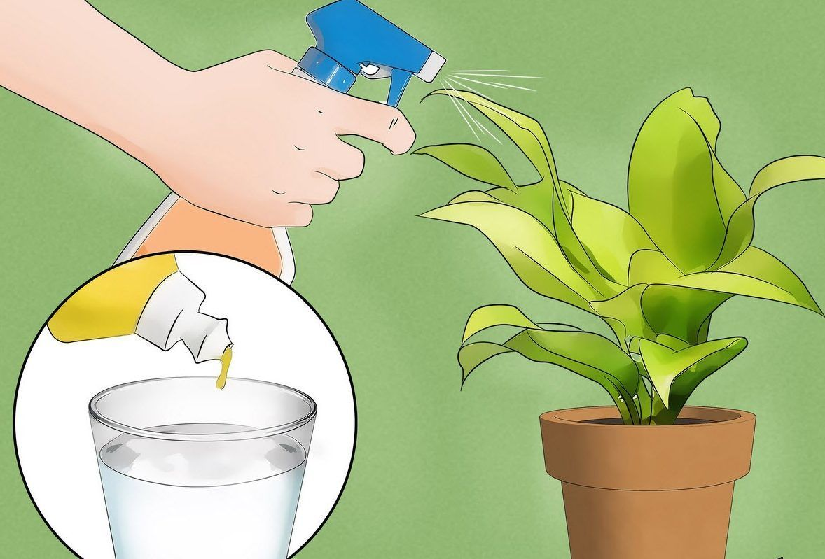 Як вивести домашніх мошок за допомогою народних засобів? як позбутися від мошок в квартирі — прості, доступні способи боротьба з мошками в квартирі.