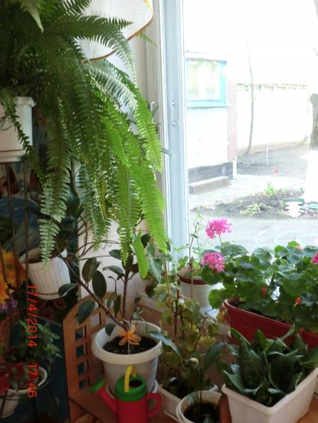 Тема кімнатні рослини 2 молодша група. Перелік кімнатних рослин з картинками за віковими групами а доу