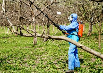 Обприскують чи дерева восени. Осіння обробка саду від хвороб і шкідників
