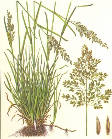 Додаток а (обовязкове) типова рослинність заплави р. Іртиш