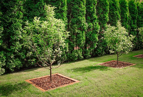 Вибираємо місце під фруктові посадки. Плодовий сад на заміській ділянці-плануємо посадку як посадити сад з плодових дерев