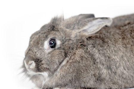 До чого сняться кролики. До чого сняться кролики жінці