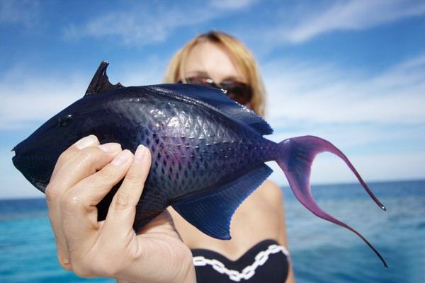 До чого сниться суха риба. До чого сниться сушена риба по тлумаченню сонників